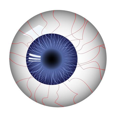 dilate: Human eyeball