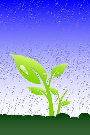 Plant in the rain Vector