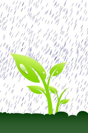 sorrel: Plant in the rain Illustration