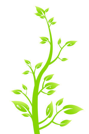 weegbree: Plant
