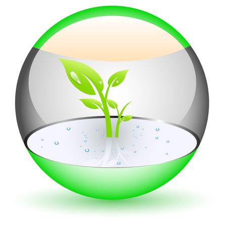 weegbree: Glossy ofb met planten binnen