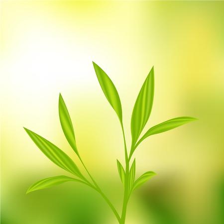 plantain: Plant