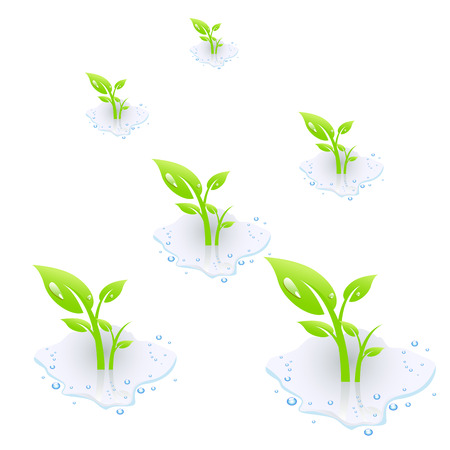 sorrel: Plant in water