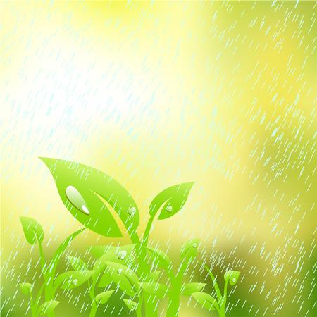 plantain: Plant in the rain Illustration