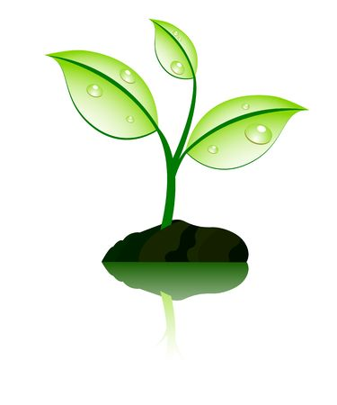 seedling growing: plant with reflection Illustration