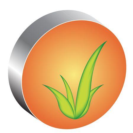 plantain: Leaves  Illustration