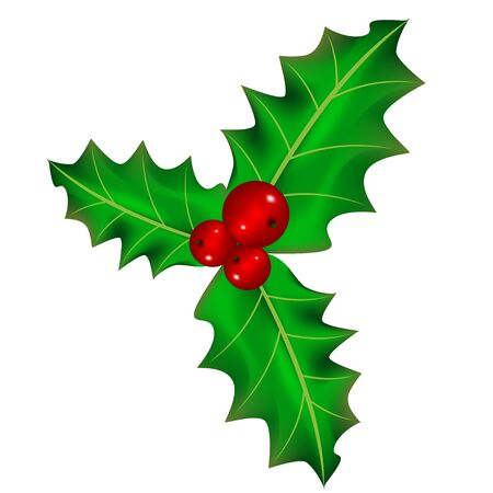 holly leaves: Christmas berry
