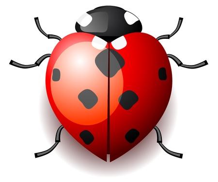 Heart shaped ladybird Vector