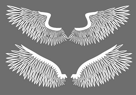 Vector wings Stock Vector - 8920771