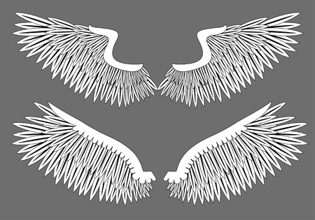 bird  celtic: Vector wings