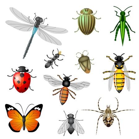 Insecten of bugs