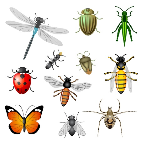 Insects or bugs Stock Vector - 9476024