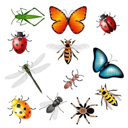 Collectie van ziekteoverbrengende insecten - bugs en ongewervelden