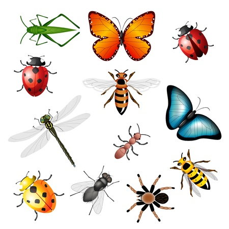 Collection of vector insects - bugs and invertebrates Vector