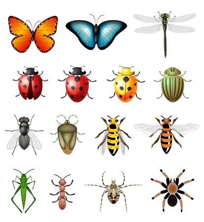 Bijgewerkte versie van insecten - bugs en ongewervelden Vector Illustratie