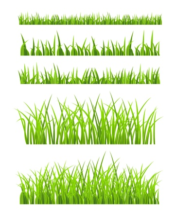 weeding: Green Grass