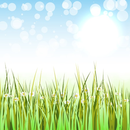 sedge: Spring Background Illustration