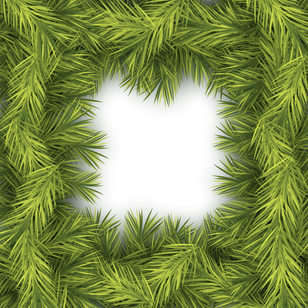 winter holiday: Christmas Fir Background