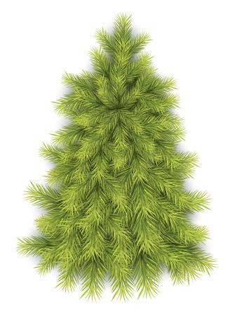 fir tree: Fir Tree Illustration