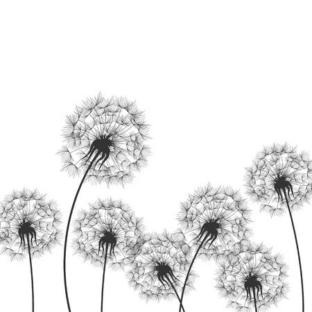 dandelions: Dandelions