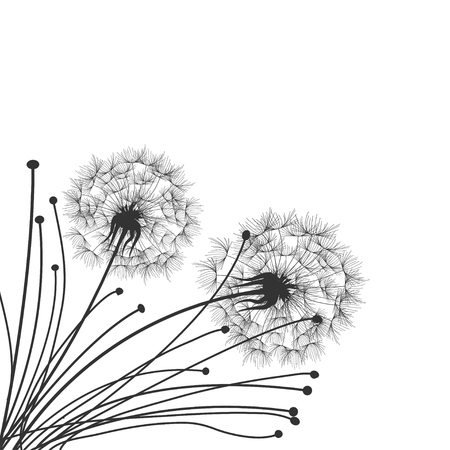 overblown: Dandelions
