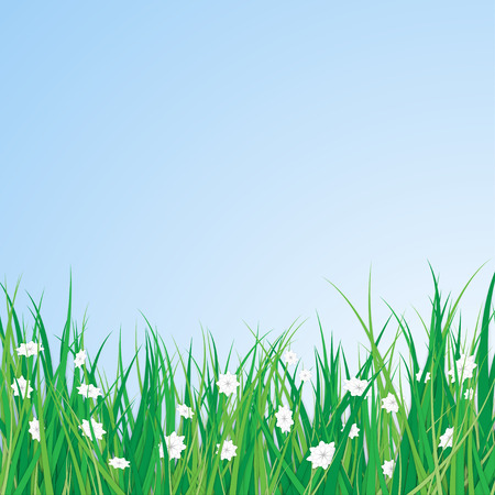 Spring Green Grass with White Blossom Flowers
