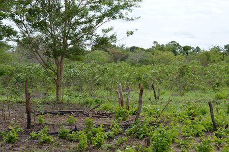 vegetation represents the life Banco de Imagens