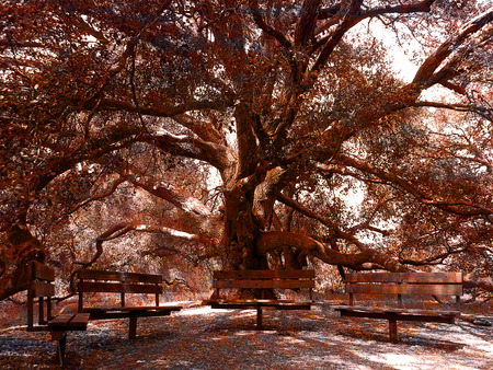 A wonderful place to rest, under the shade of this giant oak tree  Stock fotó