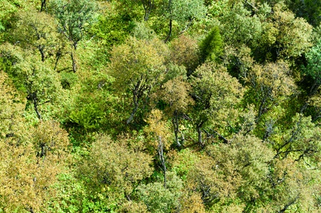 Trees seen from above on a sunny day photo