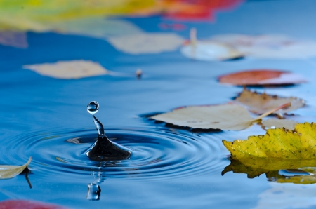 Water droplet making ripples in pond with autumn leaves