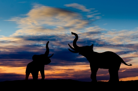 Two elephant silhouettes trumpeting in the sunset with cloudy sky Stock Photo
