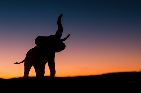African elephant silhouette trumpeting in sunset in the wild Stock Photo