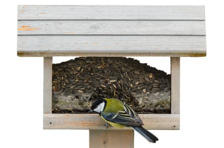 Kohlmeise auf birdfeeder isoliert auf weißem Hintergrund