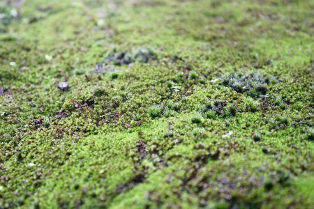 mosses: Mosses Stock Photo