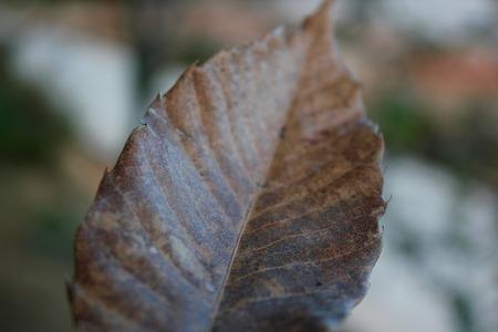 dode bladeren: Dode bladeren