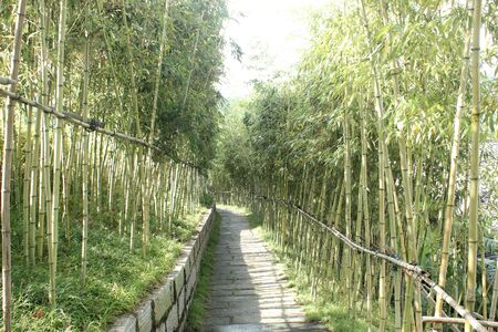 lane: Bamboo lane Stock Photo