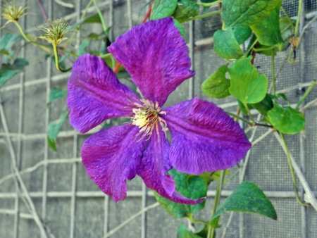 Flor púrpura Foto de archivo - 13910926