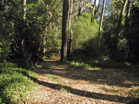 camino: Road in the forest