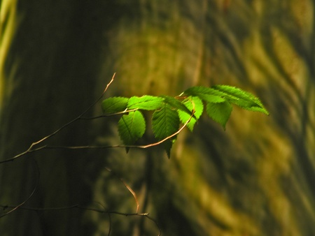 hojas: Leaves in  the light Stock Photo