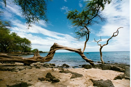 Fallen Tree at the Beach