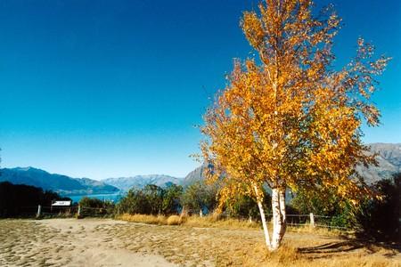 Tree and Lake, New Zealand