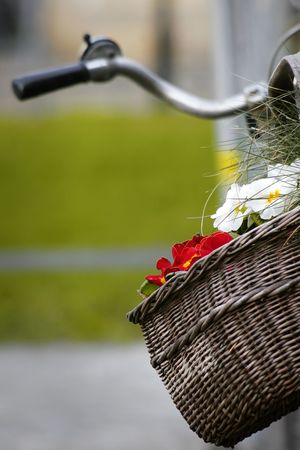 basket on a bicycle with flowers from behind