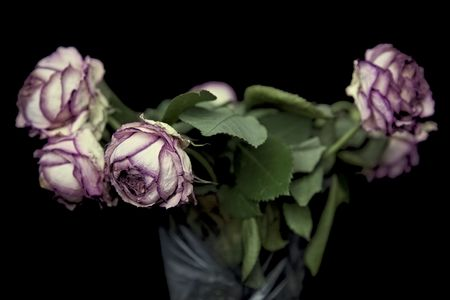 metaphorical: bunch of withered roses on black with a shallow depth of field Stock Photo