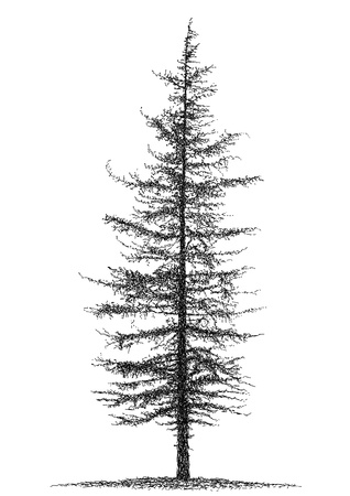 pine tree silhouette: fir