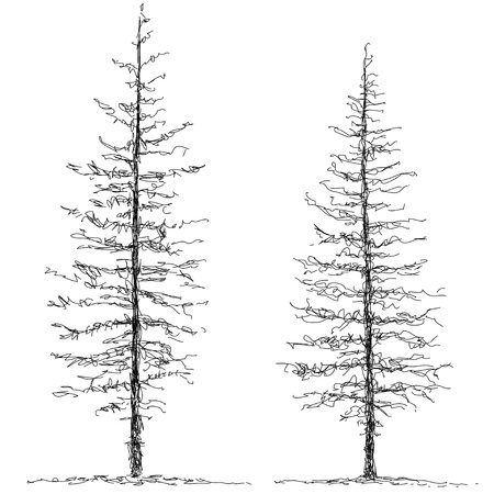 two trees Stock Photo - 10474978