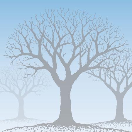 bare: Bare tree