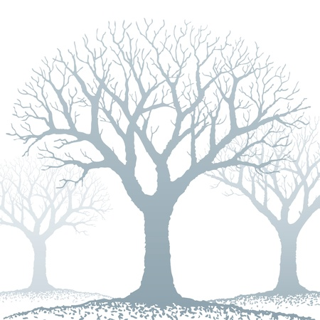 silhouette arbre hiver: Arbre nu