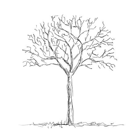 Árbol desnuda
