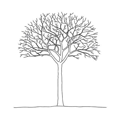 Bare tree Stock Vector - 10510977