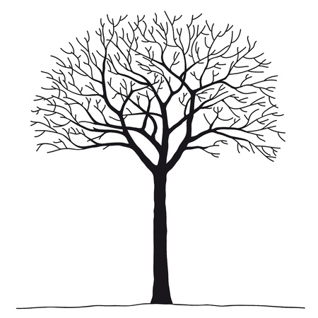 Bare tree Stock Vector - 10510978